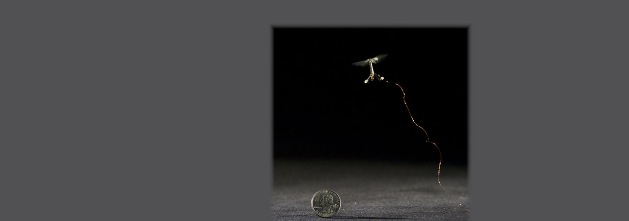robotic insect from research done at University at Buffalo's North Campus