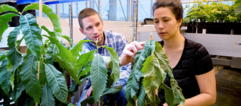 Researchers in greenhouse